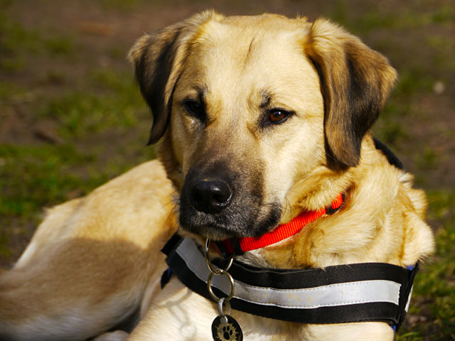 Einzelunterricht Hundeschule Ruckdeschel