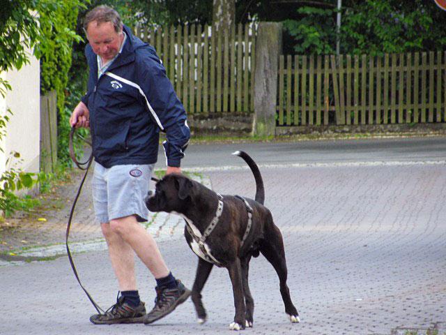 Hundekurs Hundeschule Ruckdeschel