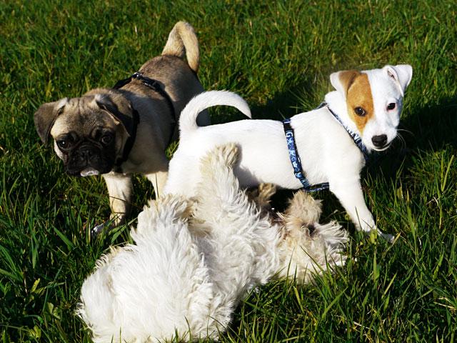 Welpenkurs Hundeschule Ruckdeschel